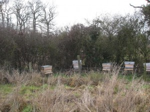 Bees at Canalside