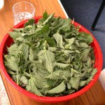 A bowl full of exquisite nettle tips for the soup