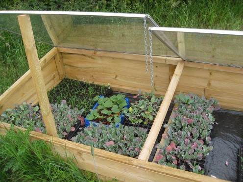 Cold Frames: A simple but effective way to protect young plants!