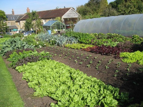 You don;t grow veg like this unless you know what you are talking about.