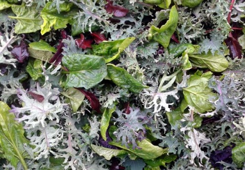 Beautiful winter salad leaves! Baby spinach, baby kale, beetroot leaves, lettuce leaves and wild rocket...