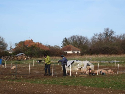 Jackie and Steve preparing the fence to move the chickens into.