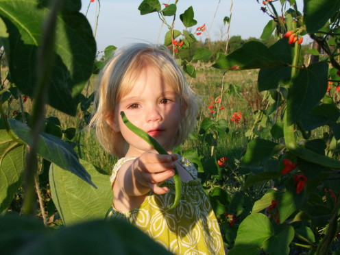 Farm member Stella, aged 2, with an Oak Tree bean