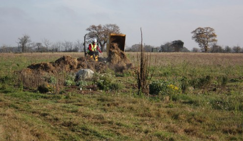 Unloading the horse muck into the muckheap