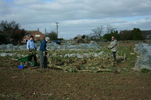 Clearing the Brussels sprouts