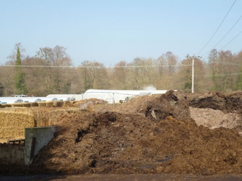 the Muck Mother Lode at Capel