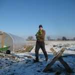 Harvesting some very cold cabbages...