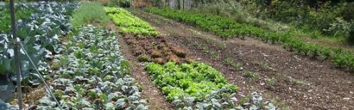 crop rotation_ls