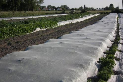 Using soil to pin down mesh