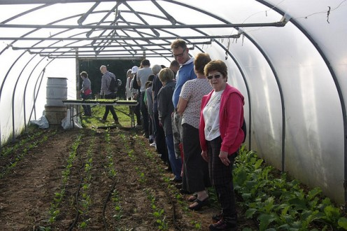"""This polytunnel is planted up with crops for the winter and all important """"hungry gap"""" of April/May"""