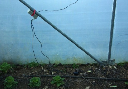 Mysterious goings on in the polytunnel
