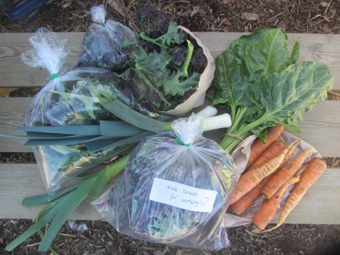 A Veg Share Box in the Hungry Gap