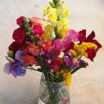 Summer Flower share