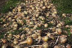 They know their onions at Flintshare!