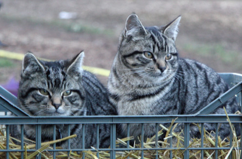 Max and Milo, the cats from next door