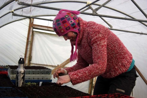 Mandy pricking out the all important Hungry Gap seedlings into modules in the polytunnel.