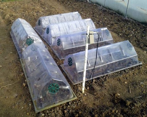 Cloches in a polytunnel with remote temperature sensors