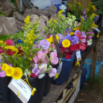 Veg share boxes with low carbon flower shares