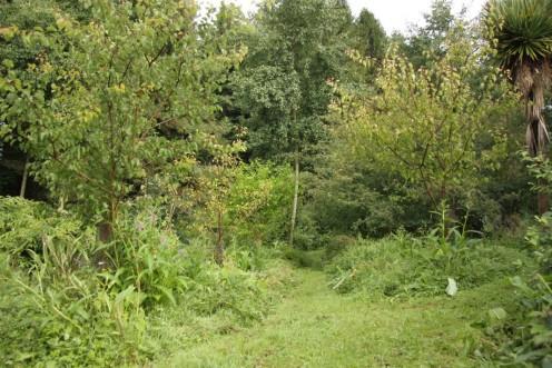 Martin Crawford's amazing Forest Garden in Devon
