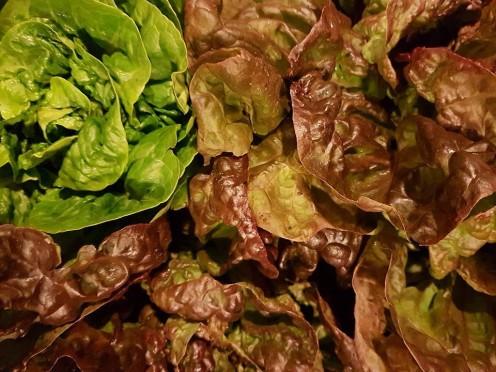 lettuce from Elene
